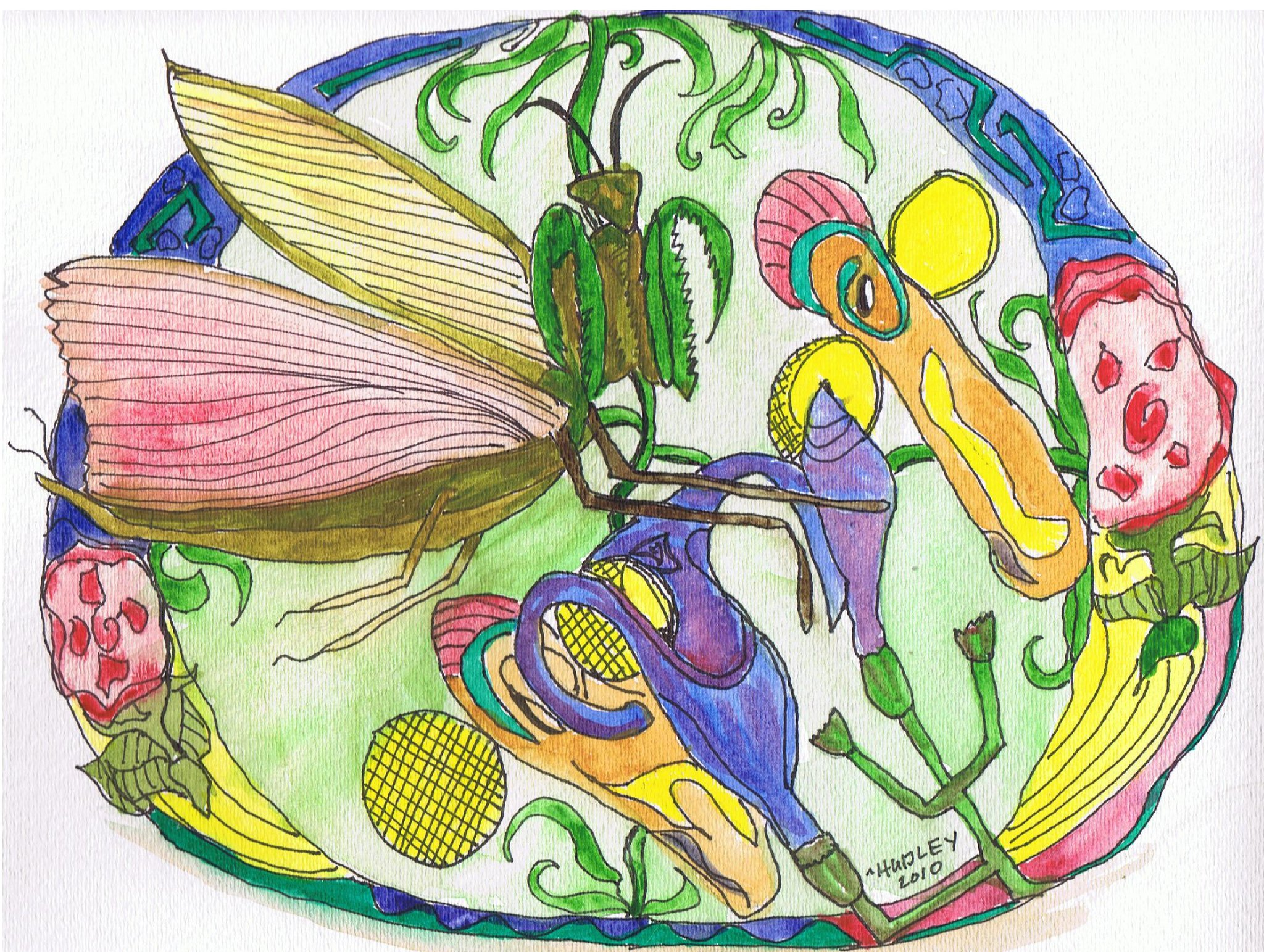 The mature Praying Mantis