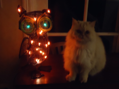 Light owl and Mr Po Po on antique table.