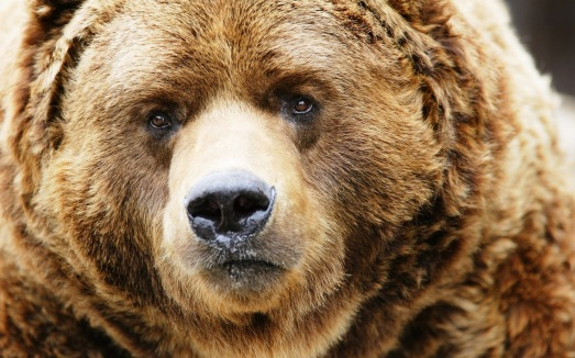 Huge-Bear