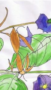 cropped-mantis.jpg