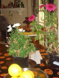 Hudley's flowers