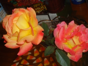 Early spring roses in my secret garden...