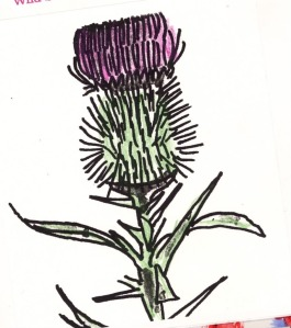 Water color by Hudley wild Thistle..